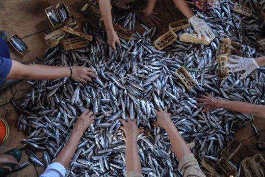 Akademisi: Hari Gizi  25 Januari, momentum genjot kampanye makan ikan