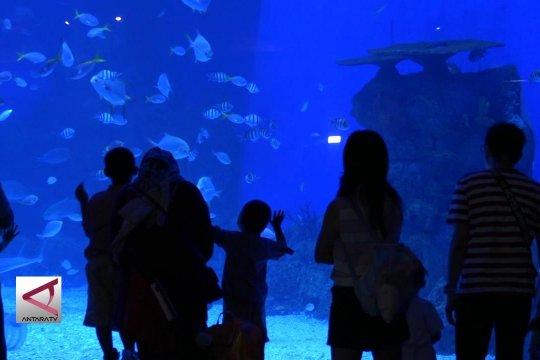 Mengenal ragam biota laut di Jakarta Aquarium