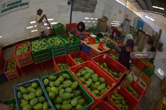Pengamat harapkan peningkatan ekspor buah ke China