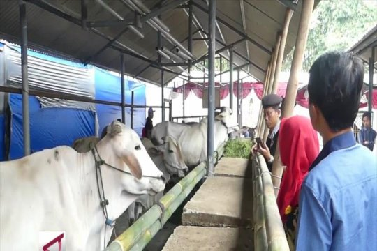 Cegah penyakit ternak dengan vaksinasi rutin