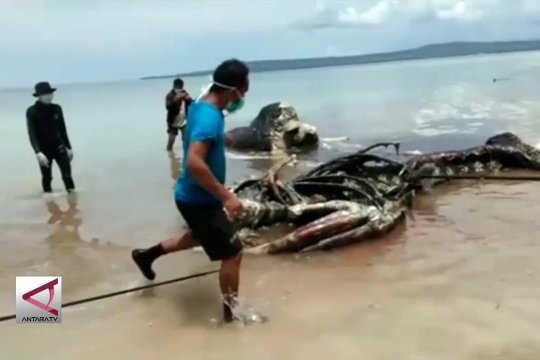 Masyarakat diingatkan jaga kebersihan Laut Wakatobi