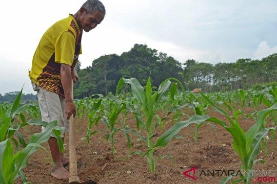 Kementan kembangkan korporasi tanaman pangan di 130 kabupaten