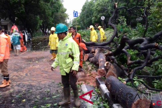 Polisi alihkan lalin di Jakpous akibat pohon tumbang