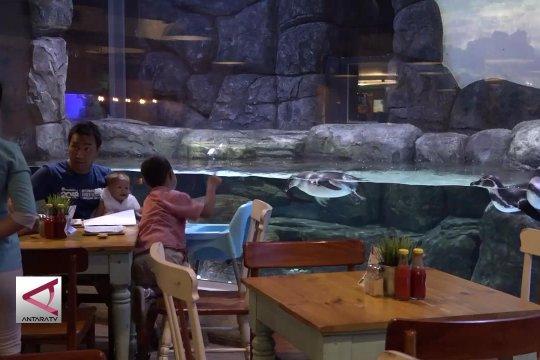 Menikmati kuliner sambil menyaksikan tingkah penguin