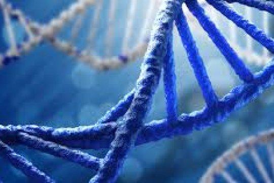 DNA lebih bisa tersimpan lama di tulang