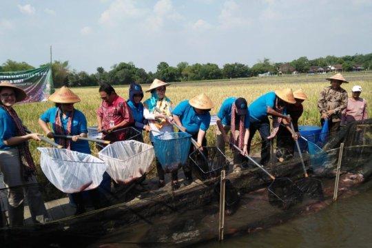 Delapan negara perwakilan tetap FAO belajar pertanian Indonesia