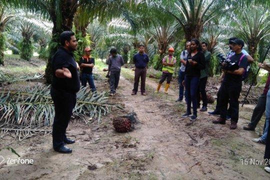 Malaysia kembangkan minyak sawit premium dari Pulau Carey