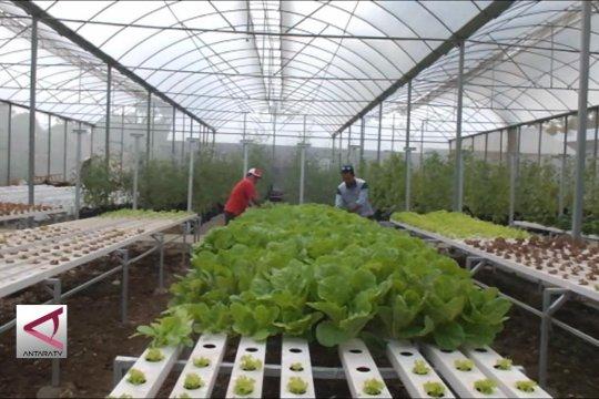 Mengubah kawasan kumuh Gunungkidul jadi Agro Technopark