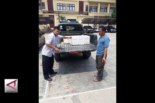 Mencegah Perburuan Rusa Liar di Ujung Kulon