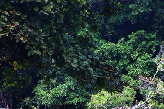 Pencurian satwa di Taman Nasional Togean Sulteng masih berlangsung
