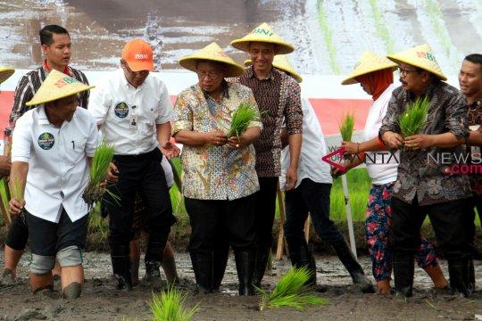 Pemerintah bahas penyesuaian harga beras