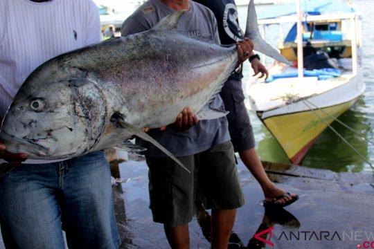 Cuaca Buruk Sebabkan Kenaikan Harga Ikan