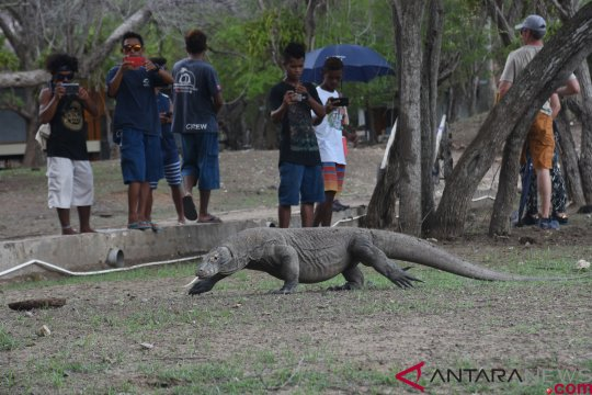 Pemda NTT berencana tutup Taman Nasional Komodo selama satu tahun