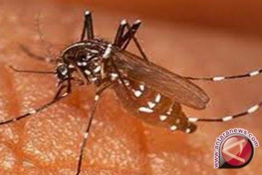 Ratusan warga Penajam Paser Utara terserang malaria