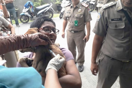 3.744 hewan di Jakarta Barat divaksin anti rabies