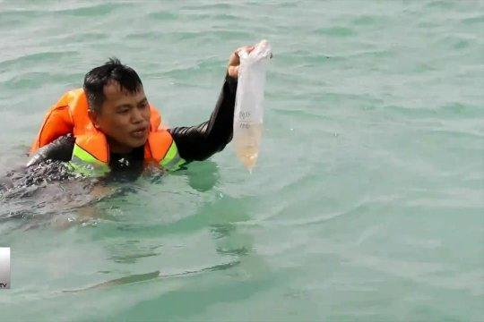 52 ribu benih lobster selundupan kembali ke laut