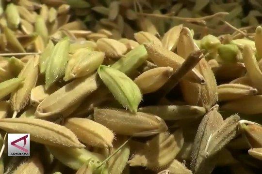 Perkuat ketahanan pangan, BMKG kembangkan SLI