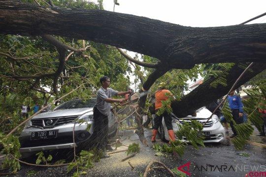 Pohon tumbang tewaskan  warga Denpasar
