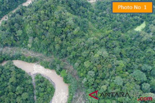 Peneliti: perlu hutan buatan dorong interaksi Orangutan Tapanuli