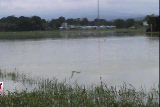 Ribuan hektar sawah terancam rusak