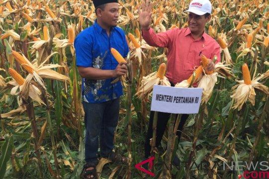 Mentan: stok beras aman sampai delapan bulan