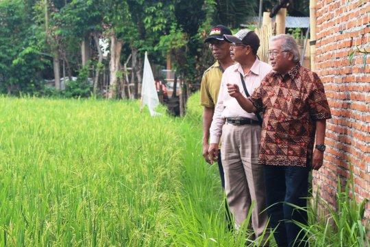 Legislator ingatkan pemerintah segera bentuk Badan Pangan Nasional