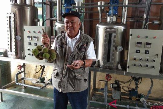 Balittri kembangkan buah kemiri sunan jadi biodiesel