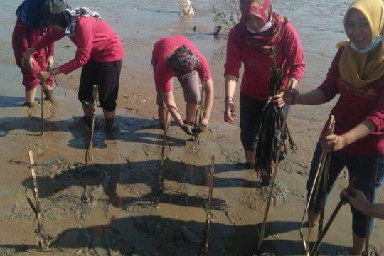 Cegah abrasi pantai di Pati, duta wisata ikut tanam mangrove