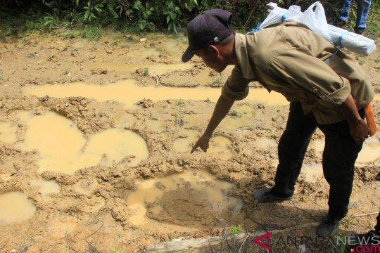 Gajah masuk perkampungan rusak tiga rumah