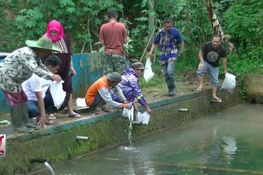 Manfaatkan potensi desa, warga tebar benih Ikan Nila