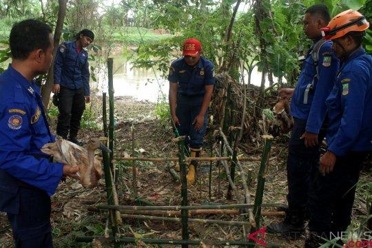 Pencinta alam imbau masyarakat hentikan pembunuhan buaya