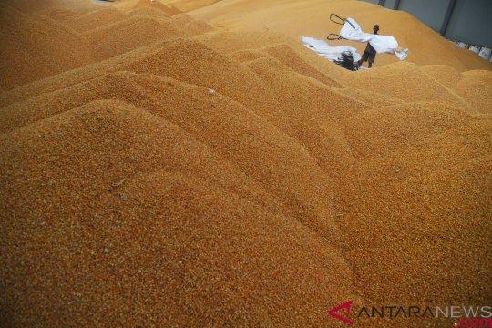 Bulog buka lelang impor jagung tambahan 150.000 ton