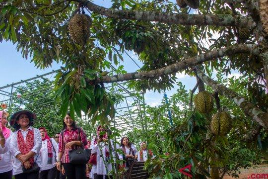 Kunjungan kerja Ibu Negara Iriana Joko Widodo