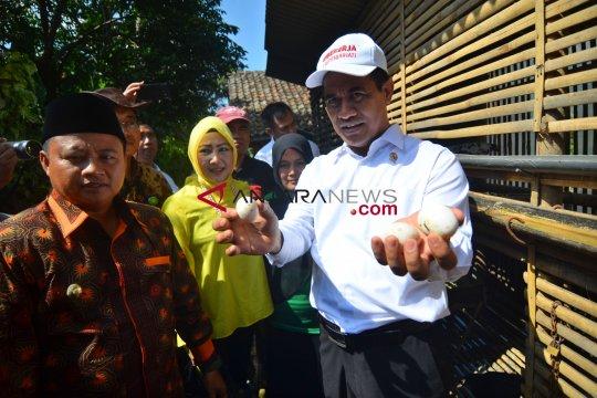 Kementan bantu RTM Sulbar melalui program Bekerja