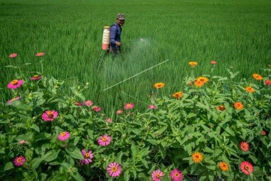 Pestisida tingkatkan risiko terkena autisme