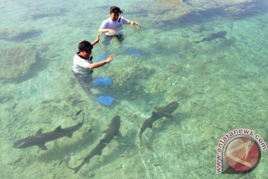 Kanada jadi negara G20 pertama larang perdagangan sirip hiu