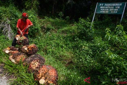 Gapki: Ekspor minyak sawit tumbuh lebih dari 1 juta ton