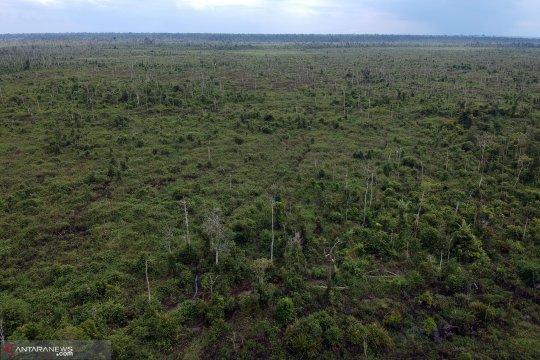 Tahura OKH Jambi alami kerusakan ekologi 80 persen