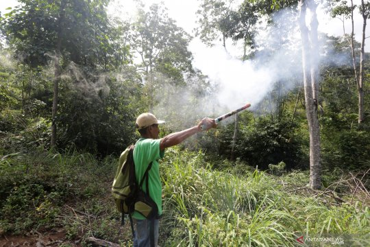 BKSDA Aceh giring kawanan gajah liar keluar pemukiman warga