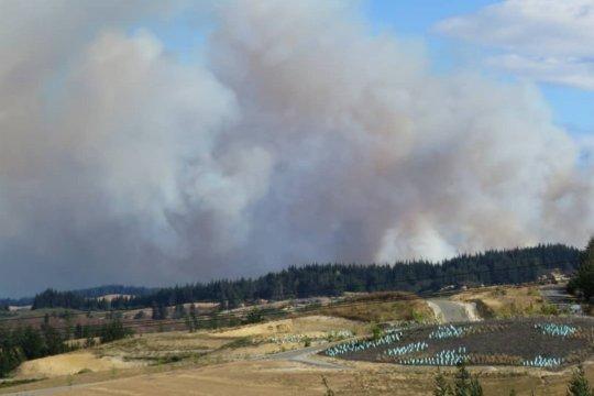 Kebakaran hutan Selandia Baru belum tunjukkan tanda mereda