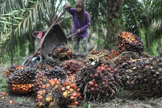 Apkasindo apresiasi pemerintah tak pidana petani sawit kawasan hutan