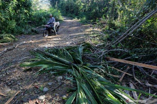 Gajah liar rusak tanaman perkebunan di Aceh Utara