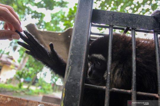 Polres Tanjabtim gagalkan penyelundupan satwa dan hewan diawetkan