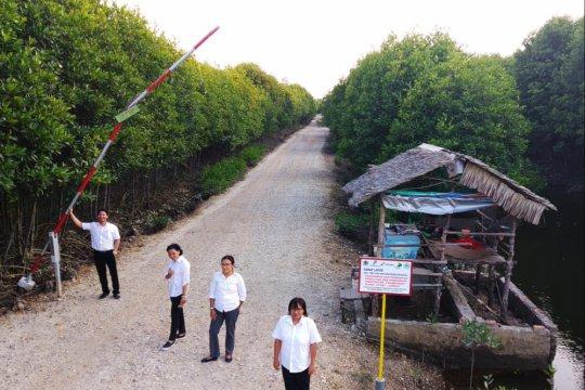 Walhi minta pemerintah selamatkan hutan mangrove yang rusak di Langkat