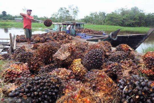 Harga sawit di Riau jatuh