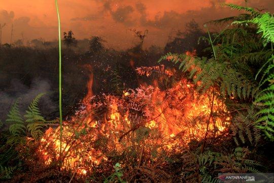 Kebakaran lahan gambut di Aceh Barat