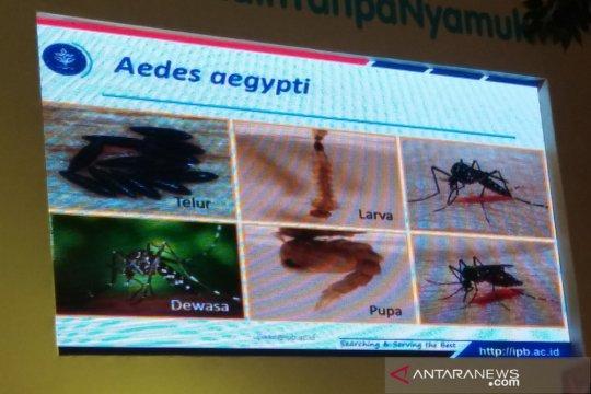 Kenali jenis nyamuk penganggu di sekitar rumah