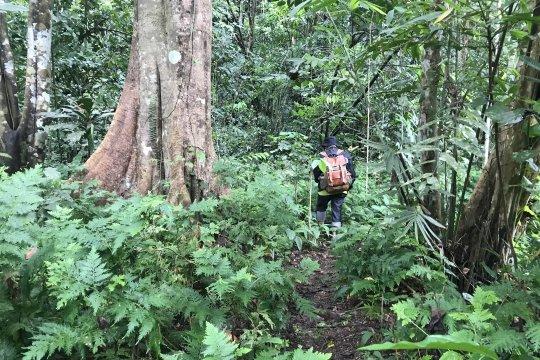 Sorong siapkan Perbup hukum adat untuk perlindungan hutan