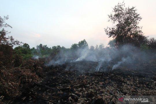 Api hanguskan 10 hektare lahan gambut di Nagan Raya