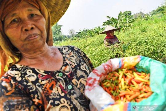 """""""Urban farming"""" dan ketahanan pangan"""